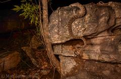 Rough-scaled Python (Morelia carinata) in ambush (Mattsummerville) Tags: mitchellplateau moreliacarinata roughscaledpython ambush westernaustralia wa wildlife reptile snake animal nature kimberley python