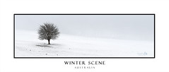 Winter Loneliness (sugarbellaleah) Tags: tree snow winter lonely rocks barren windy blowing windchill grass dry snowing gusty cold chilly freezing subzero temperature climate season leafless deciduous arid stony ground hill hillside icyblast australia rural landscape panorama oberon