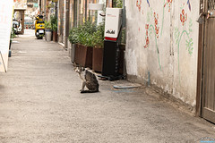 Cat Alone (Tachial) Tags: fe lce7rm3 travel street sony seoul fullframe sel1635gm korea a7r3 소니
