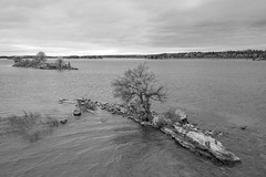 Small Island With One Tree 05 (Duncan Rawlinson - Duncan.co) Tags: 1000islands 16drjsqr1vmtbpwhnyuvm7fgxs74xwzttu canada dji duncanrawlinson duncanrawlinsonphoto duncanrawlinsonphotography duncanco fall2018aerials1000islandsontariocanada green importedoctober25th2018 landscape lifeontheriver mavicpro2 ontario photobyduncanrawlinson quadcopter rocky saintlawrenceriver shotwithadjimavicpro2 smallislandwithonetree smallislandwithonetree05 summer thousandislands aerials background bandw beautiful blackandwhite blue clouds coast coastline country drone earth eco element elemental fall2018 final fresh ground httpsduncanco httpsduncancosmallislandwithonetree05 island isolated land life natural nature one outdoor rock sea seashore small smallisland stone timeless tree water