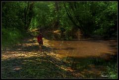 Jungle (VERODAR) Tags: jungle forest rainforest river riverbank trees nikon verodar veronicasridar