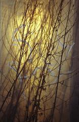 (Friedel II) Tags: layers ebenen licht light stängel nikonf3 kodakgold200 struktur münsteranalog