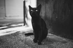 猫 (fumi*23) Tags: ilce7rm3 sony street sel35f28z 35mm sonnar sonnartfe35mmf28za a7r3 animal alley cat chat gato katze neko bw monochrome blackandwhite ねこ 猫 ソニー モノクロ