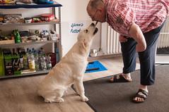 sharing a goodie (corinna1411) Tags: pets haustier dog dogs hund hunde goldenretriever golden goldenretrievers welpe puppy weis white nikon nikond300 porträt portrait sherlysgoldenglenn