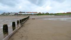 IMG_7818 (Bunty at Lissett) Tags: airedaleterrier hornsea beach kym gibbs chelsea