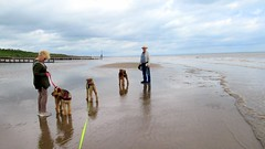 IMG_7796 (Bunty at Lissett) Tags: airedaleterrier hornsea beach kym gibbs chelsea