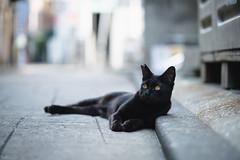 猫 (fumi*23) Tags: ilce7rm3 sony street sel85f18 85mm fe85mmf18 a7r3 animal katze cat chat gato neko emount ねこ 猫 ソニー bokeh dof