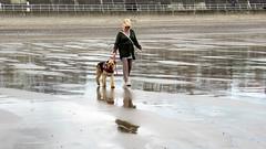IMG_7792 (Bunty at Lissett) Tags: airedaleterrier hornsea beach kym gibbs chelsea