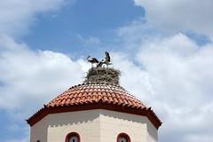 Οι πελαργοί στον τρούλο της εκκλησίας του Αγίου Σπυρίδωνα (The storks in the dome of the church of Saint Spyridon). (Giannis Giannakitsas) Tags: αγιοσ σπυριδωνασ βρανεζι βοιωτιασ vranezi agios spyridonas viotias spiridonas vranesi πελαργοσ stork