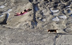 Good Boy (herellybelly) Tags: dog tan tanning summer ocean rocks beach cliffs malta maltese good boy doggo doggy pet walk bathing sliema valletta europe meditteranean