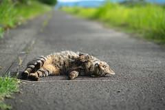 猫 (fumi*23) Tags: ilce7rm3 sony sel85f18 a7r3 animal cat chat gato katze neko emount 85mm fe85mmf18 dof bokeh ねこ 猫 ソニー