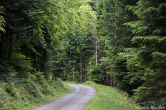 chemin forestier (Nicolas Rouffiac) Tags: forêt wood woods forêts nature vert green chemin road way