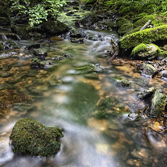 Down by the creek (mexou) Tags: longexposure trees water creek canon bed rocks stones sigma 2470mmf28 mexou