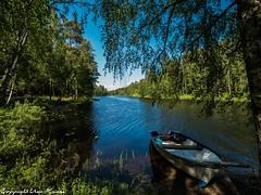 Alljungen  Sommer 2019 02 (U. Heinze) Tags: schweden sweden sverige smaland olympus nature see himmel wasser