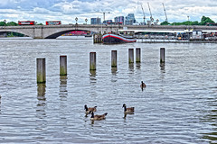 Thames at Putney (Croydon Clicker) Tags: river water tidal flow thames geese goose canadagoose poles bridge traffic boat jetty sky cloud putney london