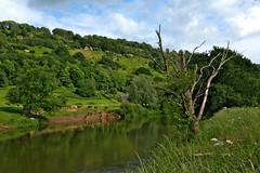 River Wye At Huntsham (elhawk) Tags: wyevalley riverwye huntsham