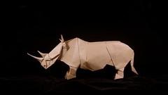 Rhinoceros (guangxu233) Tags: paper art fold paperart paperfolding animals rhinoceros kamiyasatoshi handmade origami origamiart 折纸 折り紙 折り紙作品 摺紙