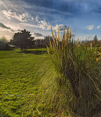 Pampas grass (Through Bri`s Lens) Tags: sussex worthing grass brianspicer canon5dmk3