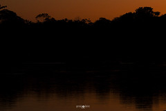 Las Piedras river, Madre de Dios, Peru (germán.herps) Tags: landscape nature wildlife peru amazon orange peruvian river rainforest jungle outdoor outside