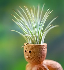 Bad Hair Day (Through Serena's Lens) Tags: macromondays curves bokeh dof airplant plant green clay figurine canoneos6dmarkii macro tillandsia