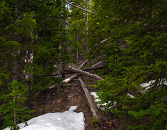 Through the Trees (DavidHenkins) Tags: nature landscape pine trees logs dead path snow
