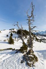 Watchmen (Nicolas Gailland) Tags: landscape nature paysage montagne mountain hiver winter neige snow white blanc trees arbres chamrousse belledonne alpes alp alps france canon hitech filter gnd nd mark