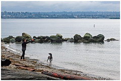 Attentive (HereInVancouver) Tags: woman dog fetch stick candid water ocean pacific englishbay beach sand rocks logs vancouverswestend canong3x dogweek vancouver bc canada city urban