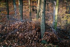(kotmariusz) Tags: woods trees forest poland nature analog 35mm filmphotography exa1b helios 442 58mm fujicolor c200 analogowa filmisnotdead
