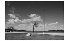 Long Island (PhotoRapper (Michael)) Tags: pentax k1 dslr pentaxk1 cmos bw oysterbay ny newyork longisland tiltshift rokinontiltshift24mmf35edasumc theodorerooseveltmemorialpark beach tree rock light