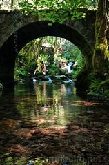 Bosque 'Mágico' de Padrenda (vmribeiro.net) Tags: padrenda espanha bosque primitivo galiza galicia spain ponte puente bridge insta