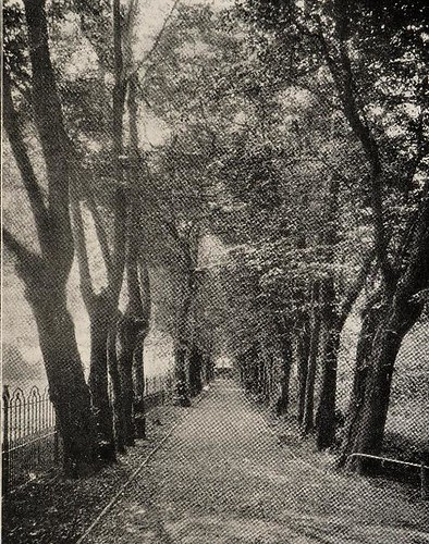 This image is taken from Page 81 of Report of the health of Tottenham UDC for the year 1903