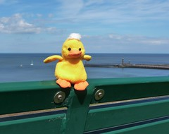 Duckling's adventures (Martellotower) Tags: duckling adventures whitby