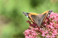 DSC_4672 (Peter-Williams) Tags: brighton sussex uk paviliongardens flowers