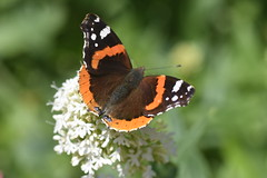 DSC_4660 (Peter-Williams) Tags: brighton sussex uk paviliongardens flowers