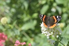 DSC_4652 (Peter-Williams) Tags: brighton sussex uk paviliongardens flowers