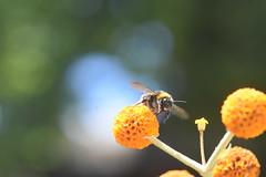 DSC_4648 (Peter-Williams) Tags: brighton sussex uk paviliongardens flowers