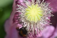 DSC_4692 (Peter-Williams) Tags: brighton sussex uk paviliongardens flowers