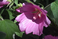 DSC_4687 (Peter-Williams) Tags: brighton sussex uk paviliongardens flowers