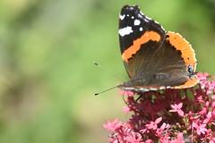DSC_4678 (Peter-Williams) Tags: brighton sussex uk paviliongardens flowers