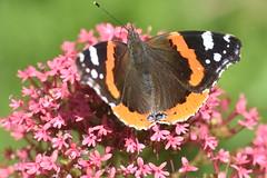 DSC_4674 (Peter-Williams) Tags: brighton sussex uk paviliongardens flowers