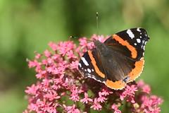 DSC_4670 (Peter-Williams) Tags: brighton sussex uk paviliongardens flowers