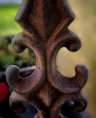 HMM Macro Monday - Iron Lily ...Curves (xtrahotbandito) Tags: hmm hm macromondays macro makro iron lily lilie rost rust curves kurven