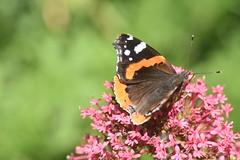 DSC_4667 (Peter-Williams) Tags: brighton sussex uk paviliongardens flowers