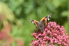 DSC_4665 (Peter-Williams) Tags: brighton sussex uk paviliongardens flowers