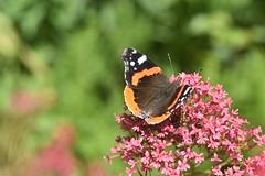 DSC_4661 (Peter-Williams) Tags: brighton sussex uk paviliongardens flowers