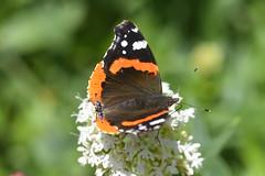 DSC_4658 (Peter-Williams) Tags: brighton sussex uk paviliongardens flowers