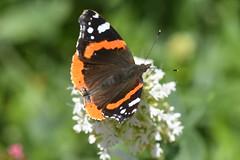 DSC_4657 (Peter-Williams) Tags: brighton sussex uk paviliongardens flowers