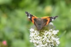 DSC_4654 (Peter-Williams) Tags: brighton sussex uk paviliongardens flowers