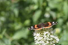 DSC_4653 (Peter-Williams) Tags: brighton sussex uk paviliongardens flowers