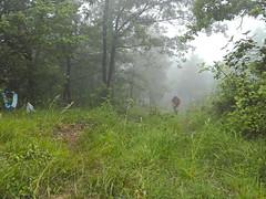 drayes 2019 (18) (association.yapasphoto) Tags: courseapied trail forêt brouillard montée chatelus vercorscoulmes france